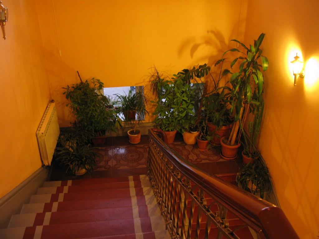 Цветы на лестничной площадке фото