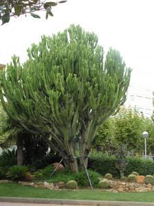 Растительность, Салоу, Испания